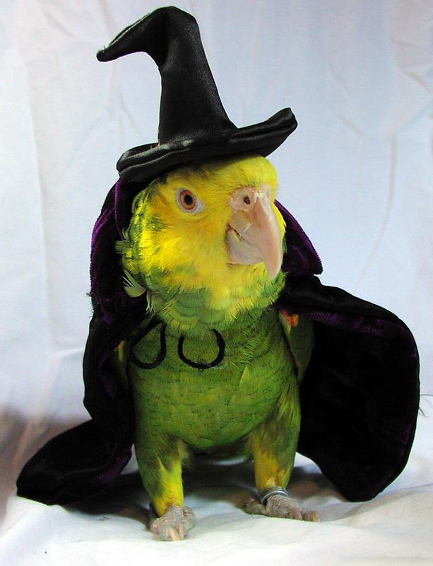The Great Parrot Magician by brazenangel