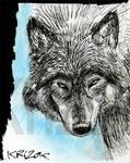 Wolf - Sketch 1