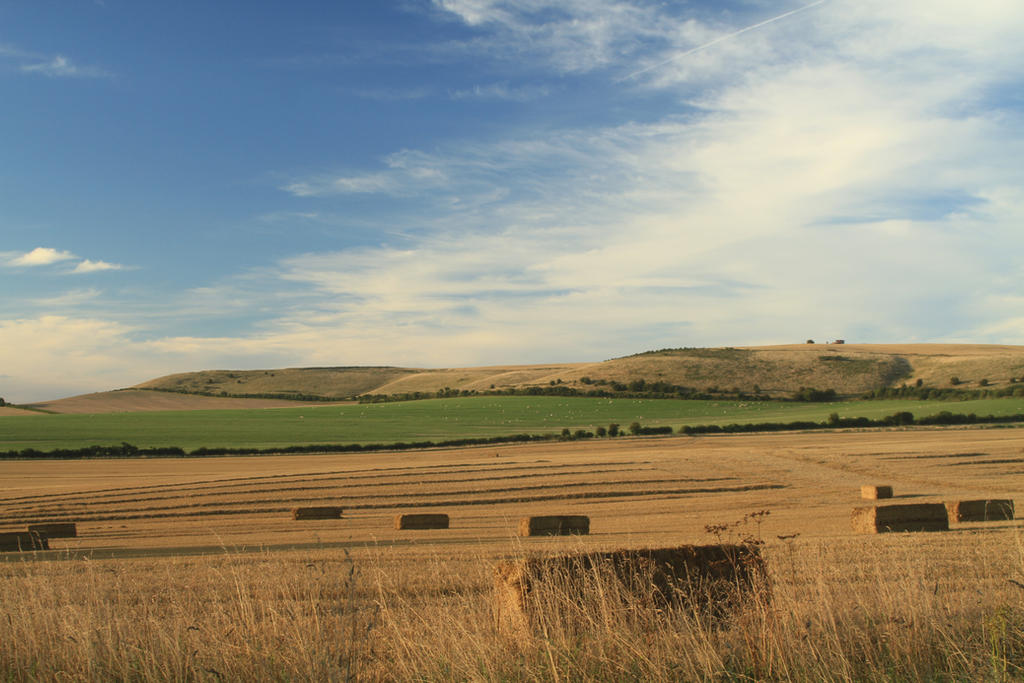 Wiltshire Downs by SomersetCider