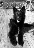 Rocky(Dog) DRAWING by Yankeestyle94
