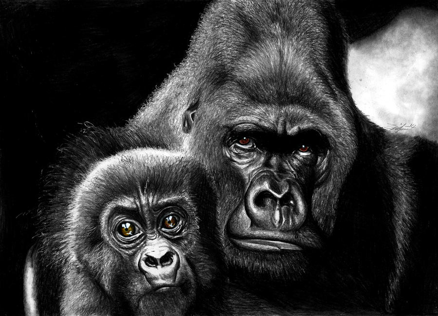 Gorilla with cub by Yankeestyle94