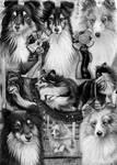 Dog Montage(Shetland Sheepdog)