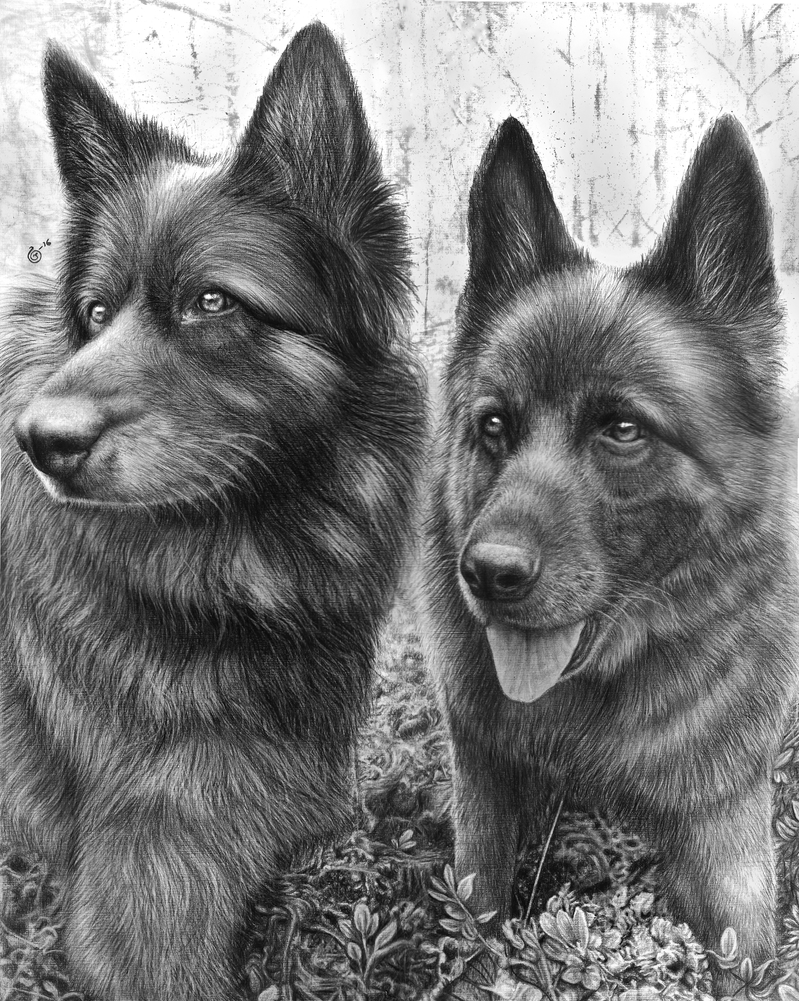 German Shepherds by Yankeestyle94