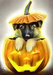Halloween Special German Shepherd in a Pumpkin