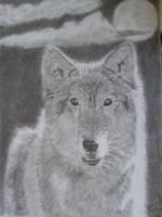Wolf by ChristianScar