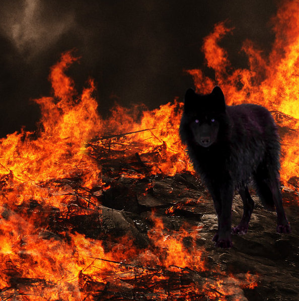 Wolf of fire