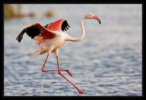 Flamingo Landing by MrStickman