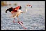 Flamingo Landing
