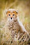 Cheetah Cub Kill