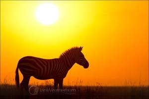 Zebra at Sunrise by MrStickman