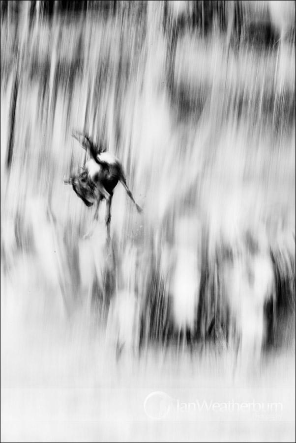 Suicide Wildebeest by MrStickman