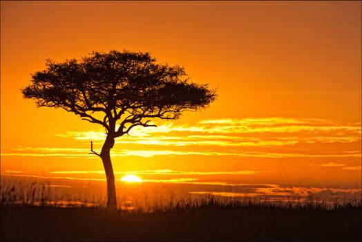 Mara Tree Sunrise