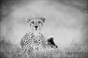 Cheetah Portrait by MrStickman