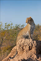 Kuhanya on a Termite Mound by MrStickman