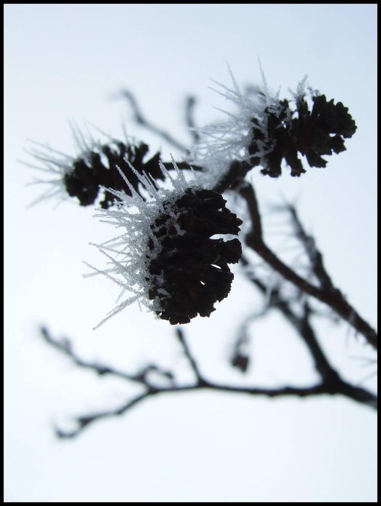 Spine 1 by Slidragon