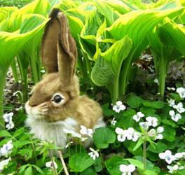 charming rabbit by anna142