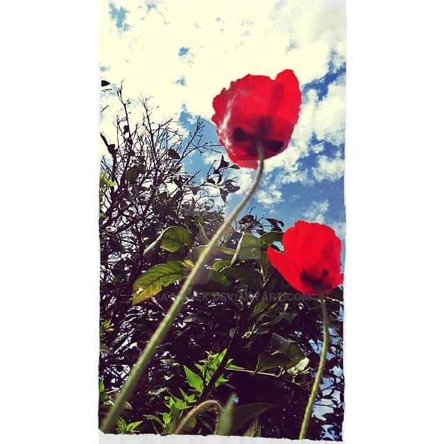 Windflower by siba-hayek