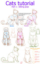 Cats tutorial - part 1 : Sitting position by Ctougas01