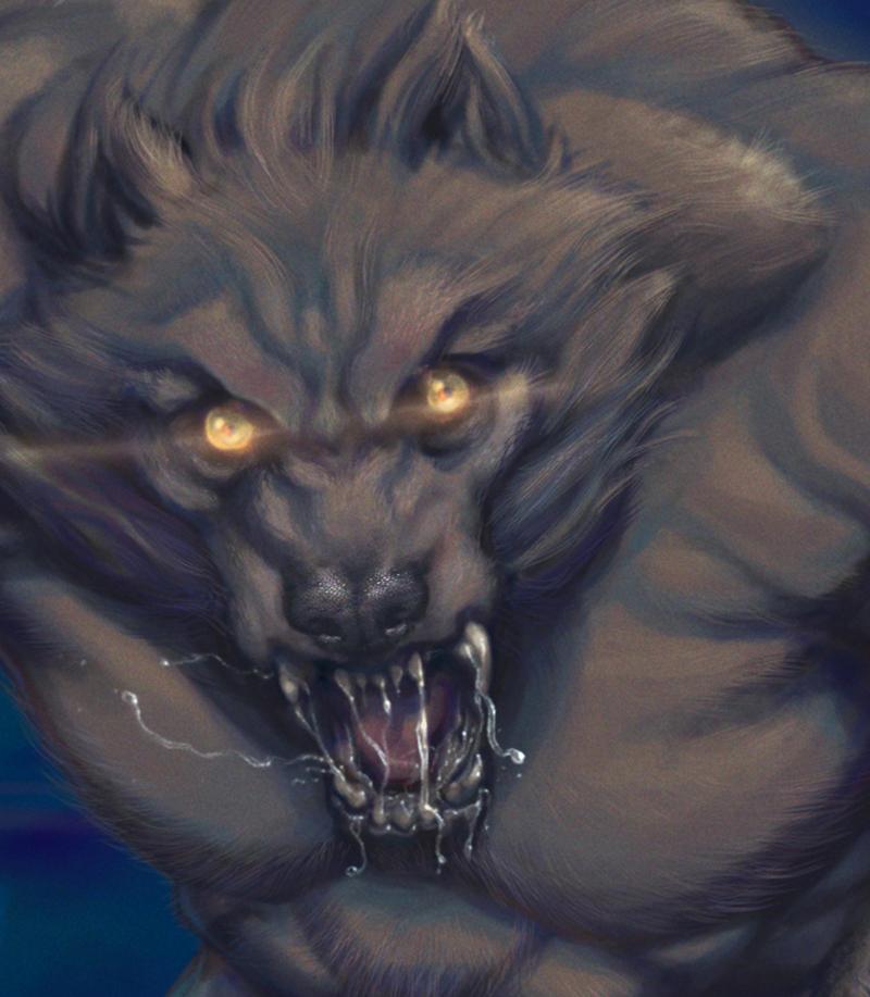 Wolf Detail Study by CassieHenryArt