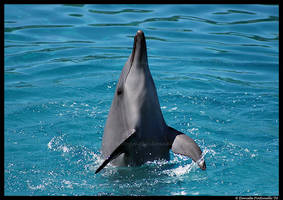 Dancing Dolphin by TVD-Photography