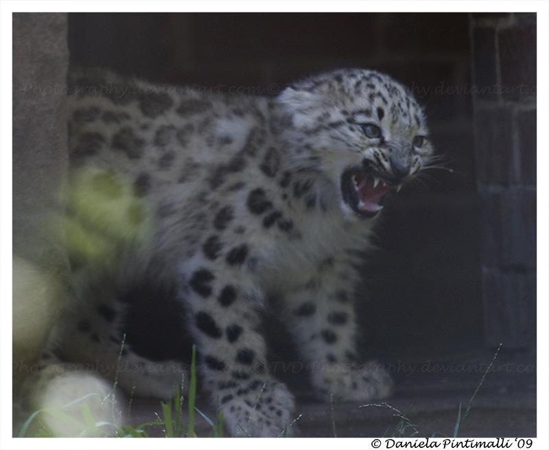angry baby cheetah - photo #37