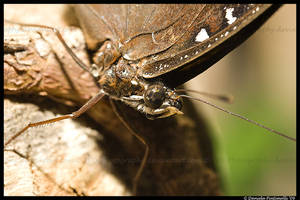 Butterfly Macro by TVD-Photography