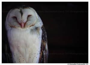 Barn Owl: Happy Face