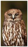 Barking Owl: Not Amused