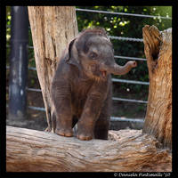Baby Elephant: Looking Cute by TVD-Photography