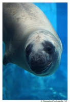 Leopard Seal: Hello by TVD-Photography