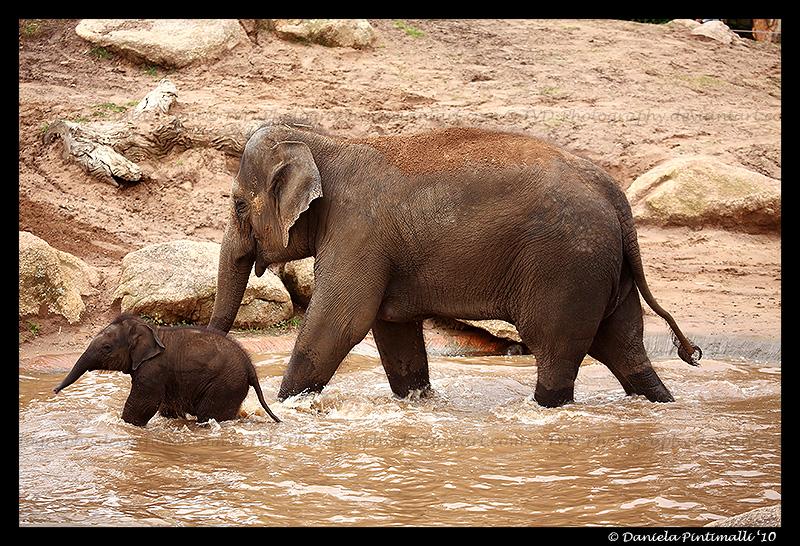 Mum and Mali by TVD-Photography