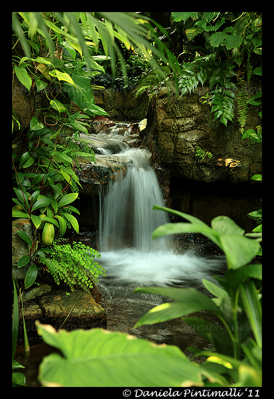 Botanical Garden by TVD-Photography