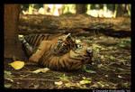 Baby Tigers: Hug Time