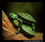 Baby Turtles by TVD-Photography