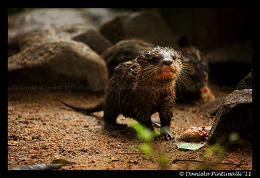 Baby Otter II by TVD-Photography