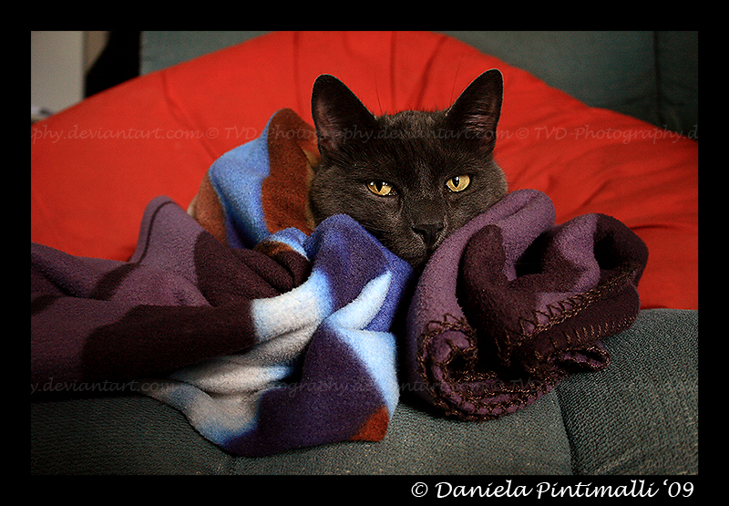 Duc blanket II by TVD-Photography