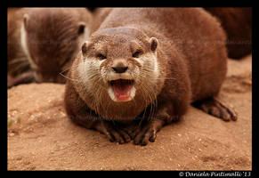 Otter Portrait VI by TVD-Photography