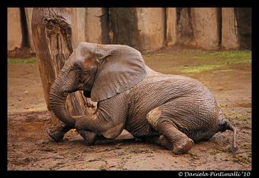 Elephant: slip slide by TVD-Photography