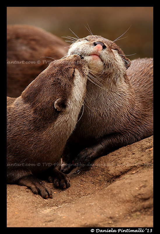 Otterly Adorable III by TVD-Photography