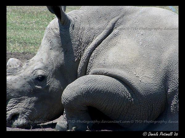 Rhino closeup by TVD-Photography