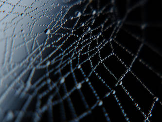 Dew Drops by Edwige-Lch
