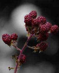 Raspberries by Edwige-Lch