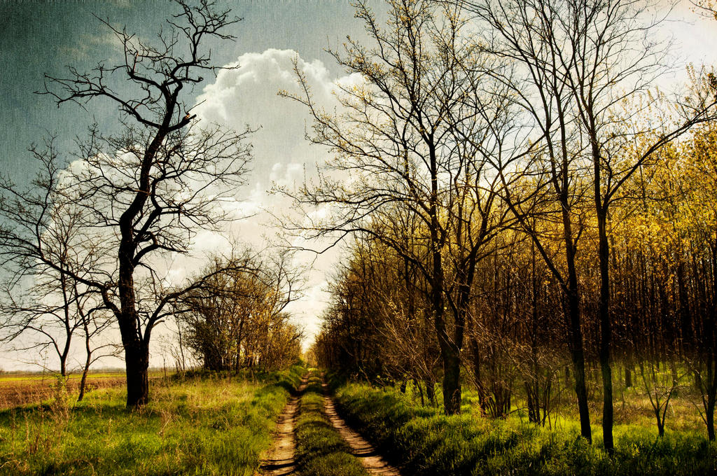 Way to spring by Louisolah