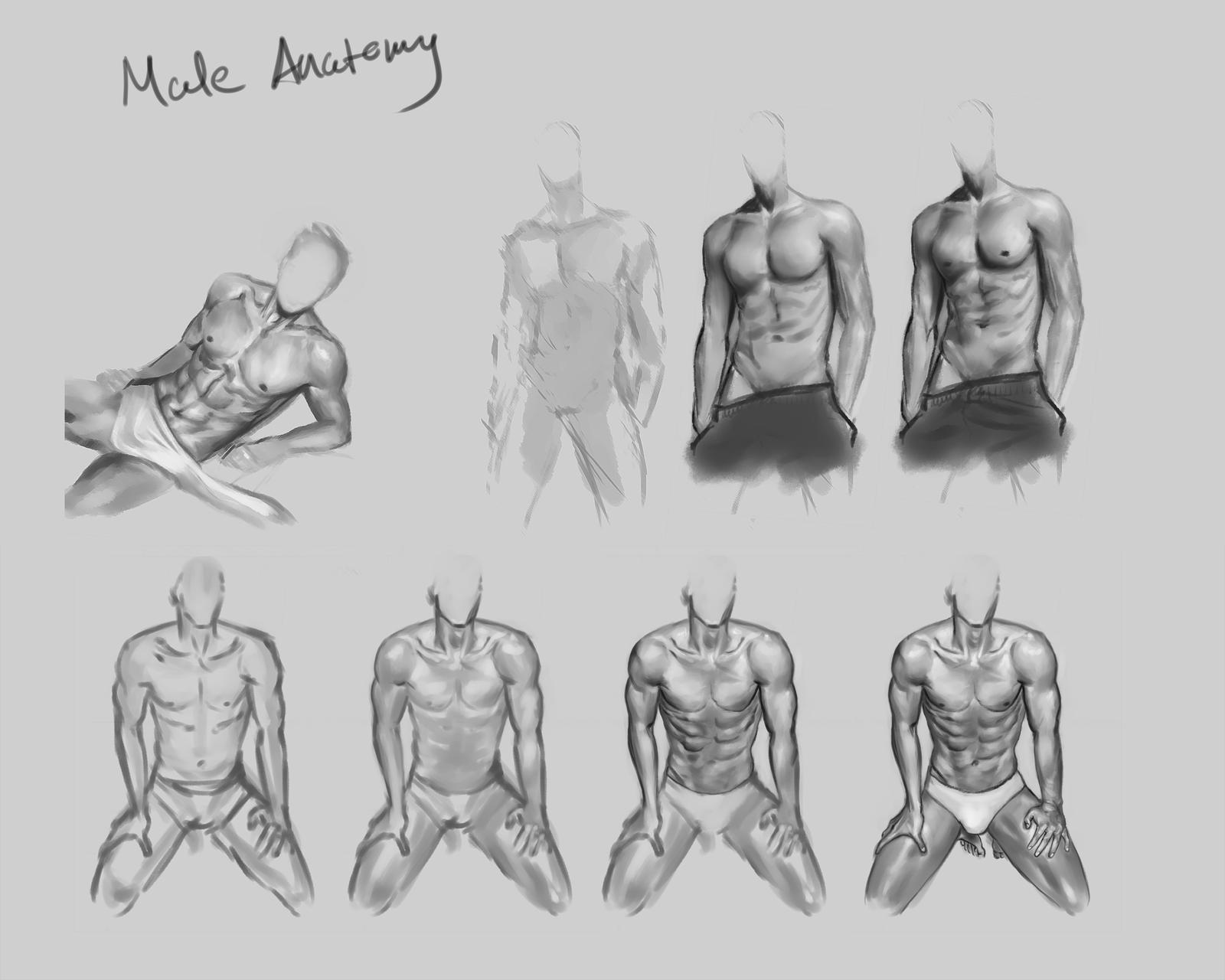 Male anatomy practice by CitrusGun on DeviantArt