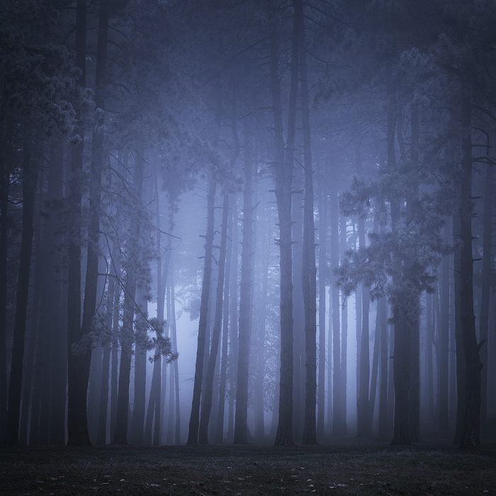 Misty woods by draganea