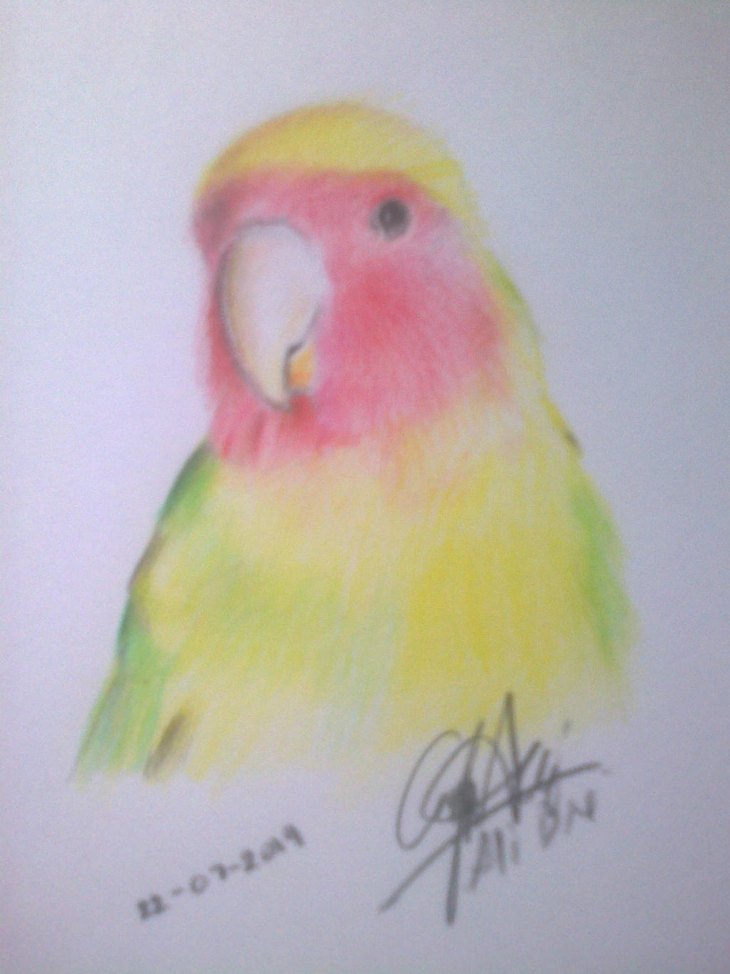 Love Bird Drawing Colored Pencil By Aldesart On Deviantart