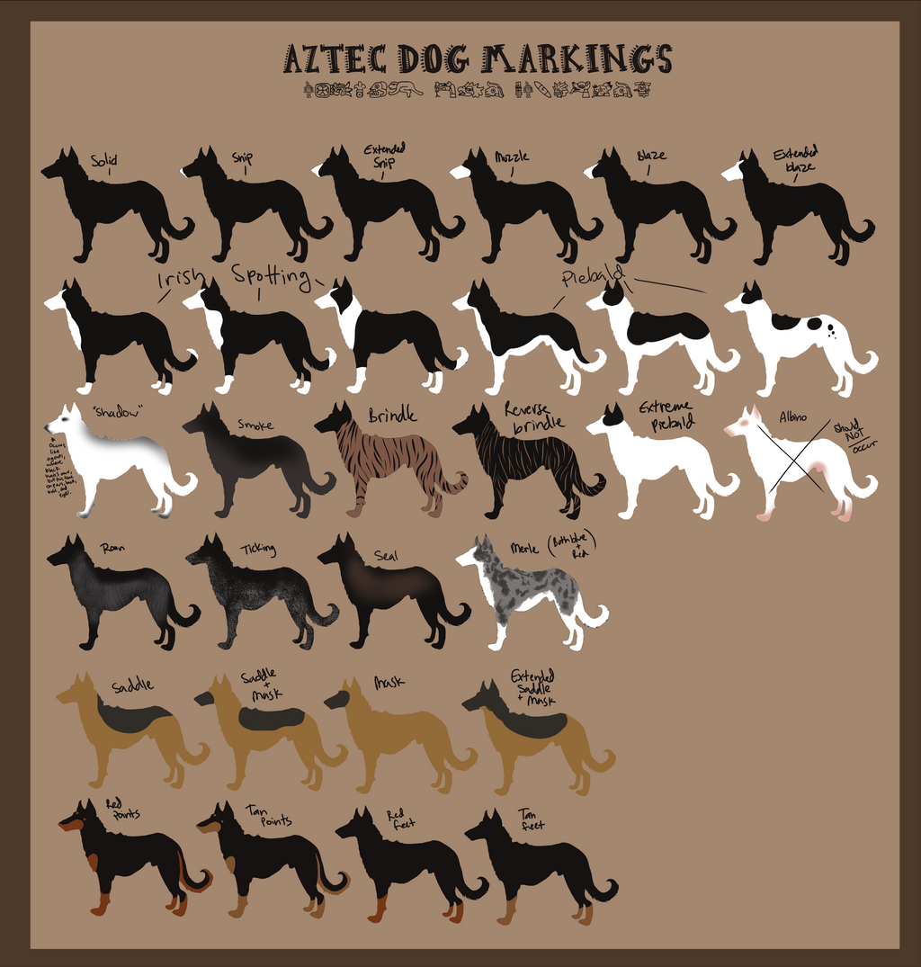 Dog Colors And Marking...