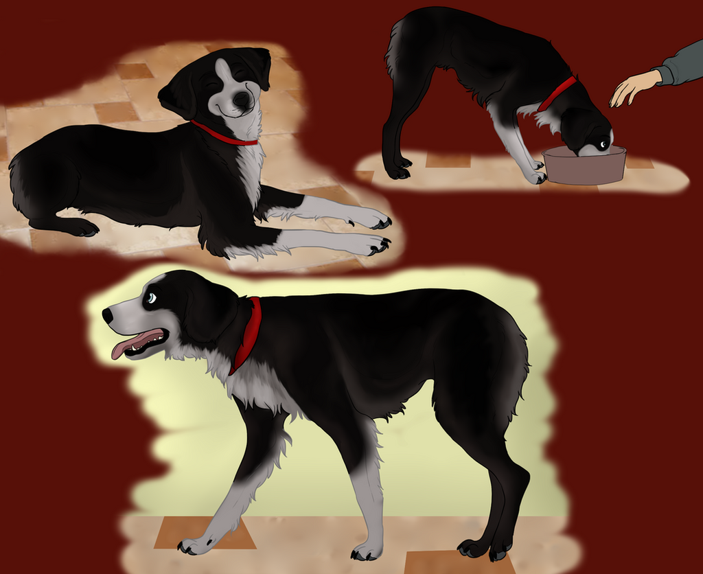 Mikasa .:Puppy Training:. by mexicanine