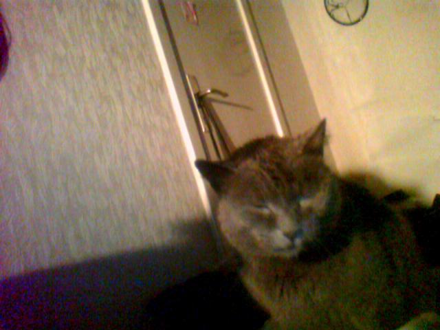 My grey cat Morzart by mryamaki
