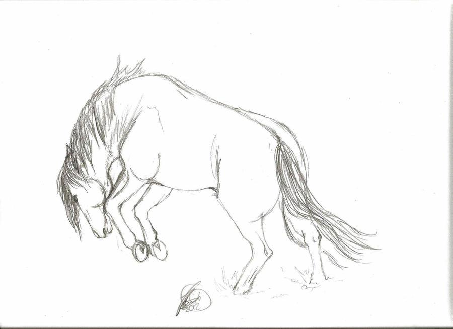 bucking horse sketch by velvet stain